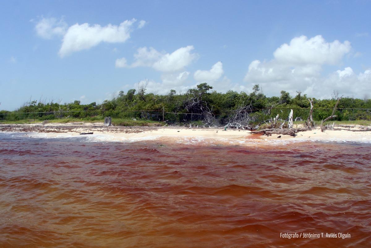 foto de marea roja