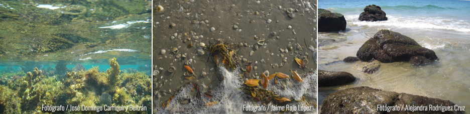 foto de algas