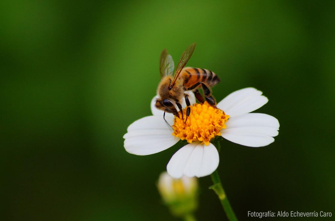 banco de imágenes biodiversidad mexicana comisión nacional para