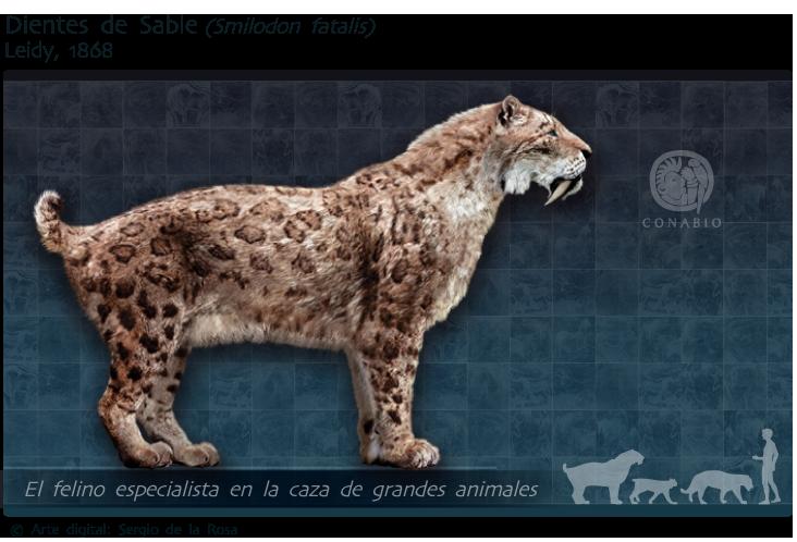 Dientes De Sable Biodiversidad Mexicana