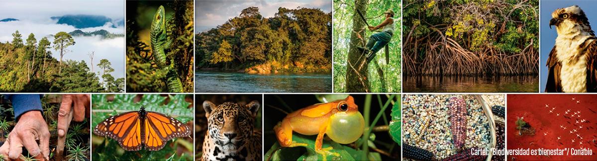 Qué es la biodiversidad? | Biodiversidad Mexicana