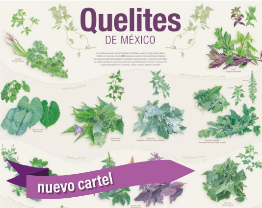 Cartel quelites